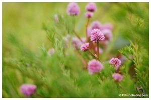 fuji-xe1-macro-flower