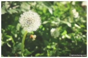fuji-xe1-macro-flower2