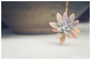 fuji-xe1-macro-flower3