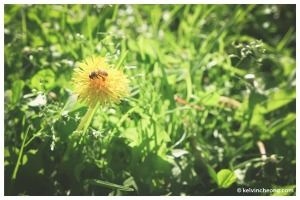 fuji-xe1-macro-flower-bee
