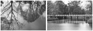 fuji-xe1-bridge-water